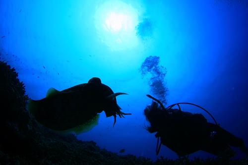 サンゴの産卵日近づく!!