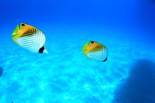 内海でじっくり!透明度良好!水温29度!