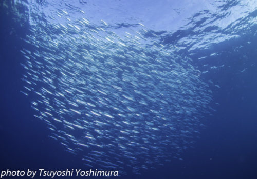 政府から緊急事態宣言が解除(沖縄県)!!