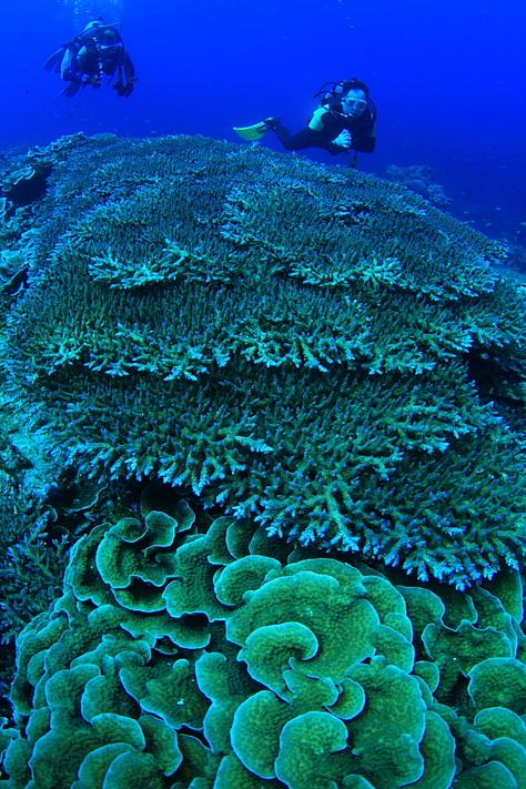 美しきサンゴ礁でまったり!!