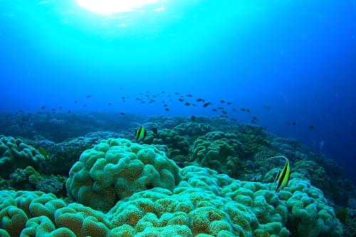 サンゴの保全活動!!