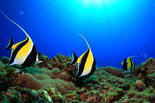 海藻類が回復して増加中!!